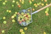 Apfelaufleser
