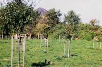 Hochstamm-Neupflanzung