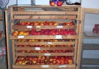 Lagerschrank für Winteräpfel