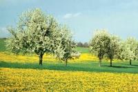 Frühlingsstimmung