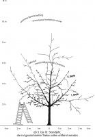 Obstbaum beernten von Hand