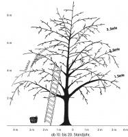 mittelalter Obstbaum