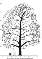 ausgewachsener Obstbaum