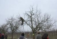 1. Obstbaumschnitt-Symposium RLP