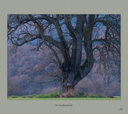 Birnbäume Ohliger2016